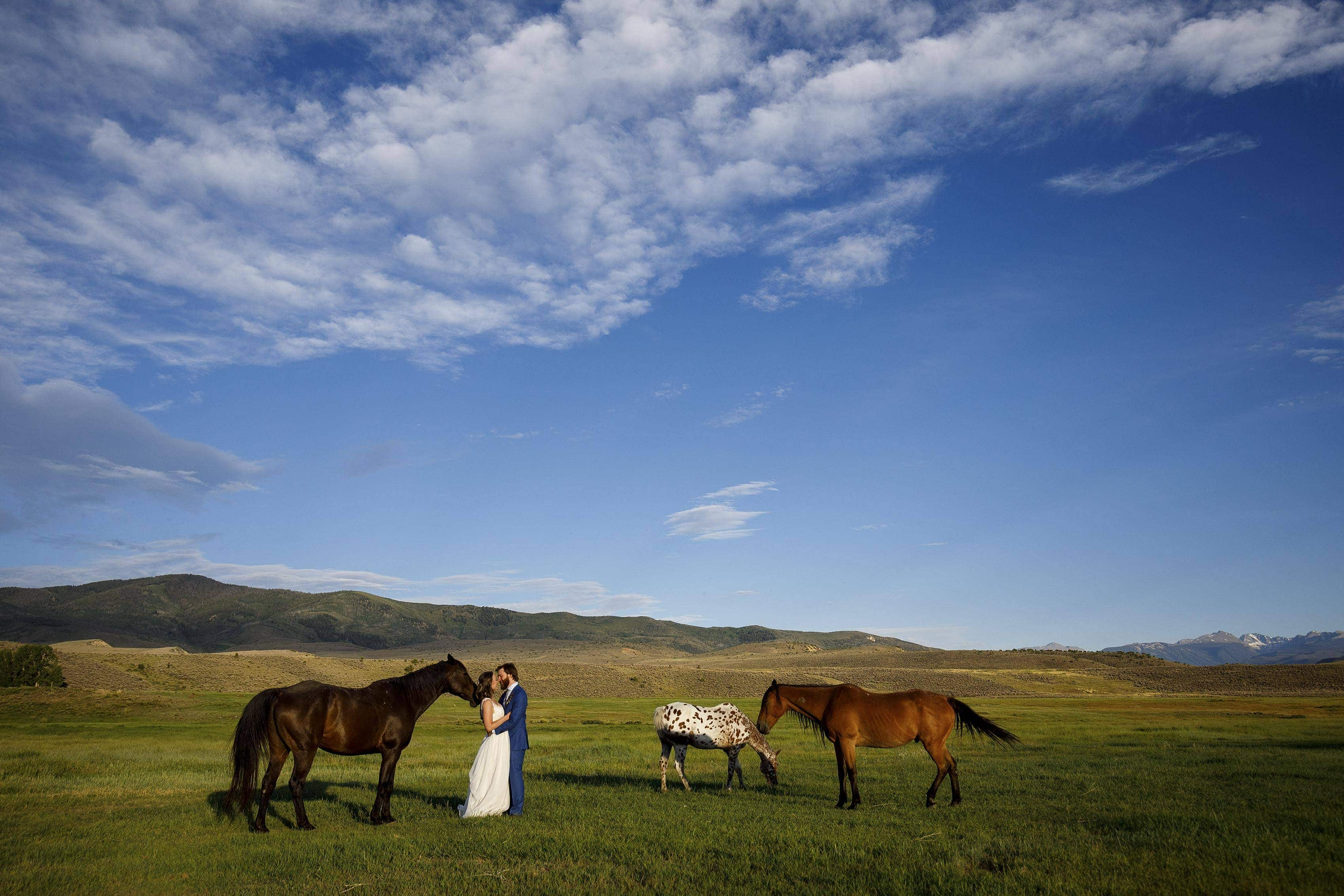A group of wild horses graze as the newlyweds share a moment together in a field on a summer evening at 4 Eagle Ranch in Wolcott, CO